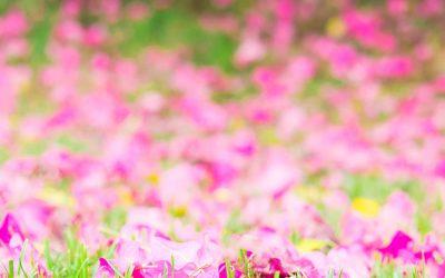 Las Flores del Alba